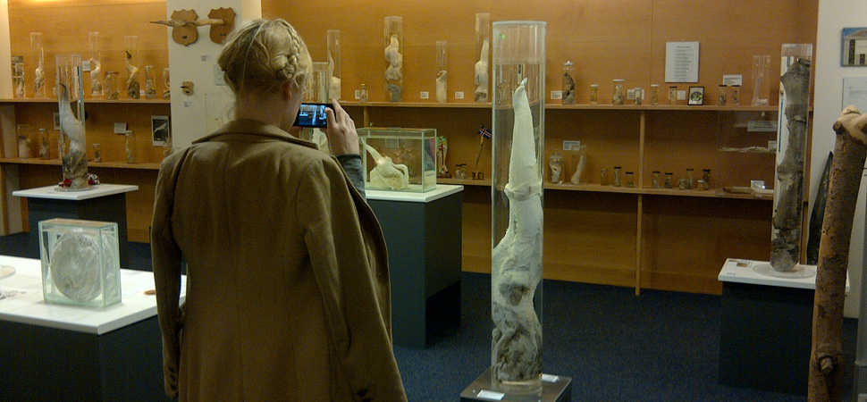 De la Faloteca Nacional de Islandia al Museo del Orinal