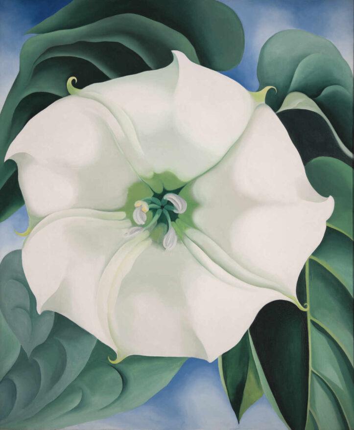 'Estramonio. Flor Blanca'. Georgia O'Keeffe.