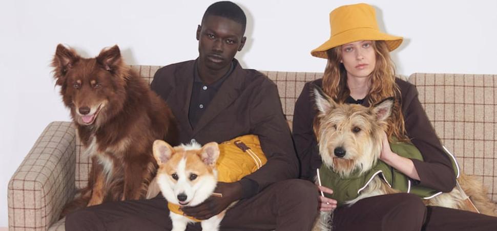 Las firmas de moda se lanzan a por un nuevo público: las mascotas