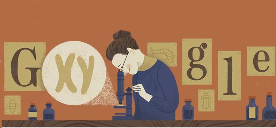 Nettie Stevens, la mujer que revolucionó la genética