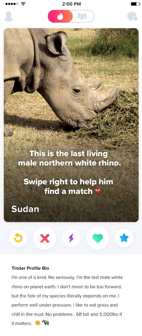 El perfil de Sudan en Tinder