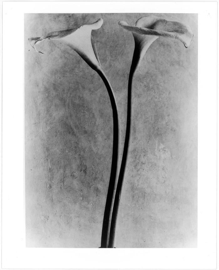 Calas, c. 1925/Tina Modotti